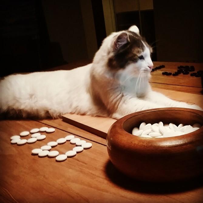 kedilerde psikolojik hastalık tedavisi